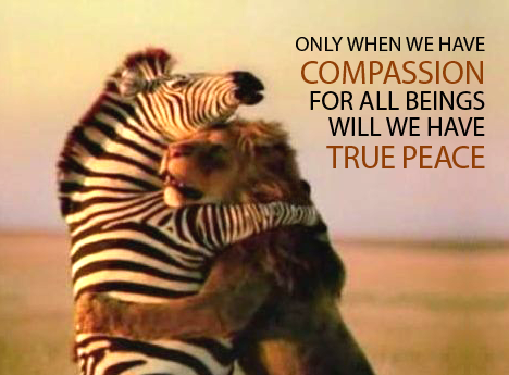 compassion-lion-and-zebra-love 2
