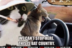 funny-pictures-cats-are-in-bat-country