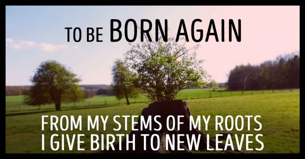 To Be Born Again. From my stems of my root, I give birth to new leaves. My personal stories where I was born again through life. A new me.